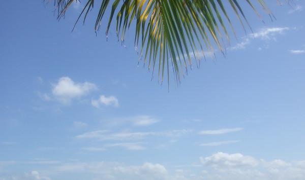 Suriname Rivier (foto; René Hoeflaak)