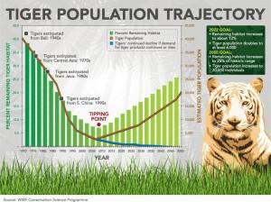 Grafiek uit 2010 van tijgerpopulatie en doelstellingen (bron:www.wnf.nl)