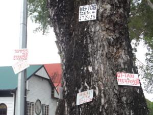 'Taxiiboom'  in Paramaribo. Keuze genoeg (foto: rené Hoeflaak)