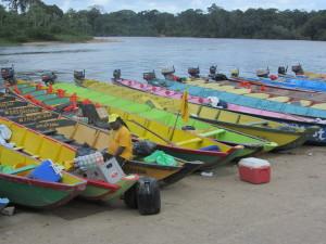 Maart 2016: korjaalbootjes aan de oevers van Surinamerivier bij Atjoni (foto: René Hoeflaak)
