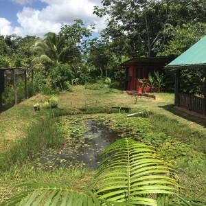 13 februari 2017: Domburg, Suriname: tuin Guesthouse Little Paradise (foto: René Hoeflaak)