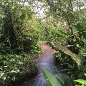 21 maart 2018: pad vlindertuin van Neotropical Butterfly Park (foto: René Hoeflaak)