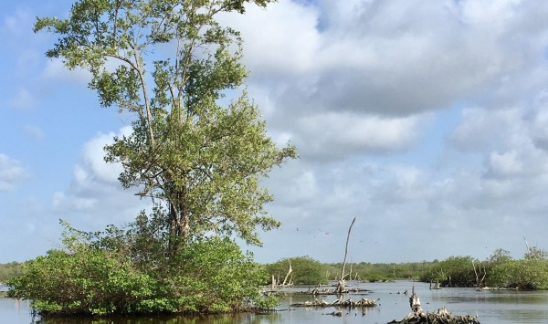 Suriname, Bigi Pan, maart 2018 (foto: René Hoeflaak)