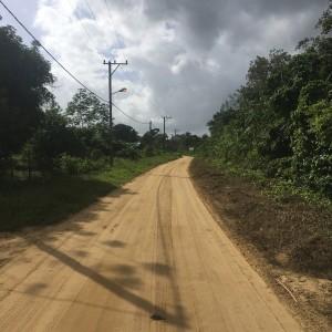 Suriname, Saramacca, 12 maart 2018 (foto: René Hoeflaak)