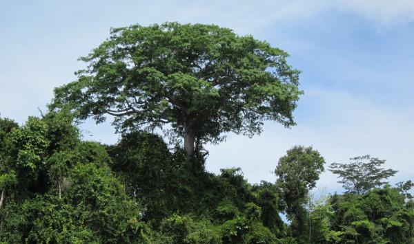 Suriname, februari 2011 (foto: René Hoeflaak)