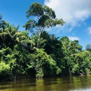 Surinamerivier, 16 maart 2018 (foto: René Hoeflaak)